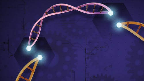 Horizon Discovery will be working with the University to develop base editing, a new type of technology that would engineer DNA without breaking the gene, making it a more accurate process that would reduce mutations in the gene. – Photo by Flickr