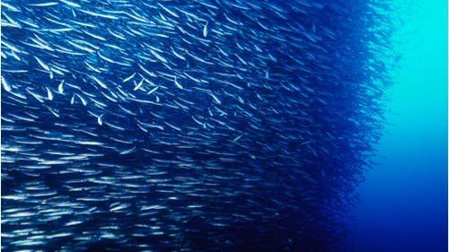 The research study found that the effect of climate change on ocean temperatures has resulted in a 4-percent decline of fish available for consumers to eat and fishermen to catch. More than 1 in every 2 people rely on fish for nutrients. – Photo by Photo by Wikimedia | The Daily Targum