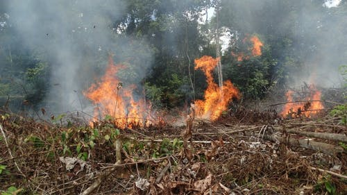 Fires in the Colombian Amazon are more likely now than in 2016 due to unforeseen impacts that the end of war and subsequent government-based land management have had. A Rutgers study found that threats to the country's high level of biodiversity are growing. – Photo by Rutgers.edu