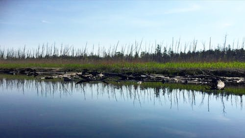 """""""Ghost forests,"""" or former forests full of dead trees, have expanded across the Northeast coast, likely due to factors such as increasing storm surges and higher groundwater levels from sea-level rise. – Photo by Rutgers.edu"""